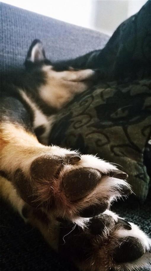 Maak eens een close-up van de pootjes als je schat ligt te slapen:)