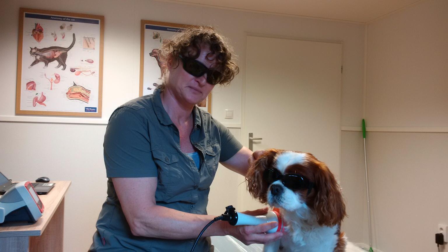osteopathie bij honden