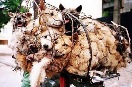 World Dog Show China