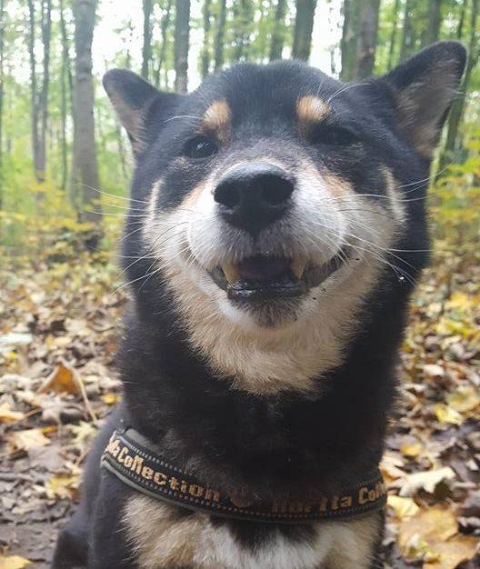 Verlatingsangst hond