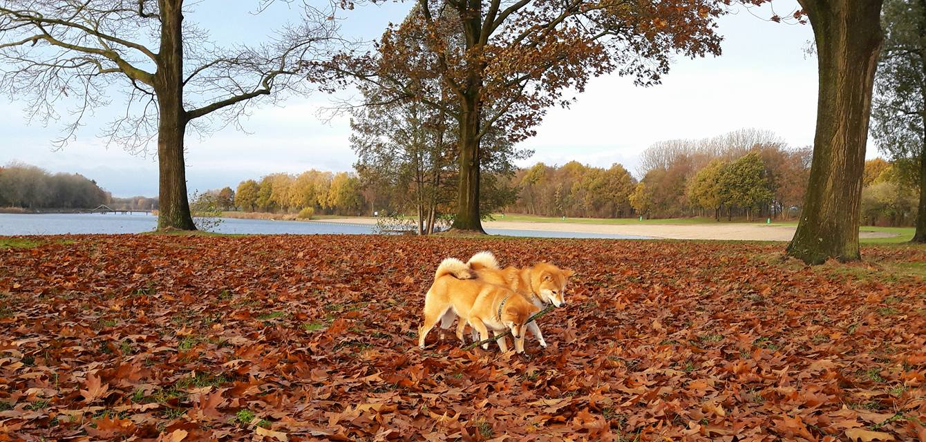 honden herfstbladeren